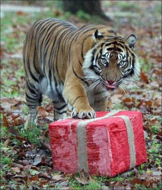 Поздравления с днем рождения тиграну 15