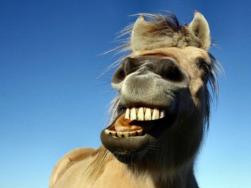 Картинка с улыбкой смешной с зубами, картинка отличного