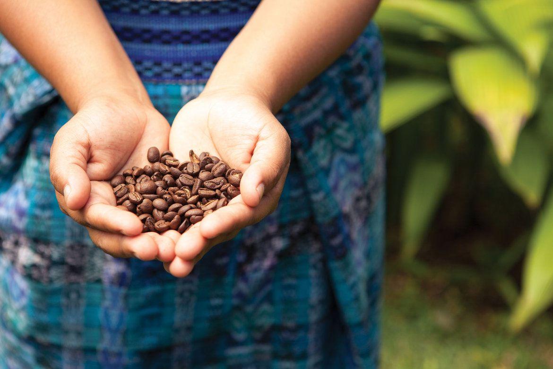 заказать картинки с кофейными плантациями первый вопрос, который